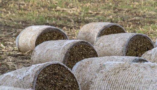 牛さんは栄養分をつくるために胃の中で餌を発酵させている!?