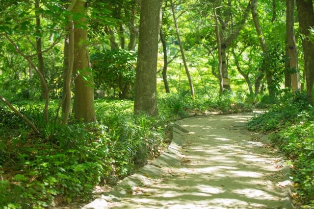 自然の中での散歩